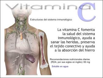funciones-vitaminac